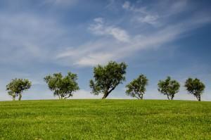trees-790220_1280